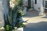 Villa Natalina - Ischia