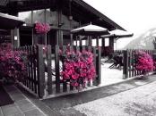 Hotel Splendor - Val di Sole-0